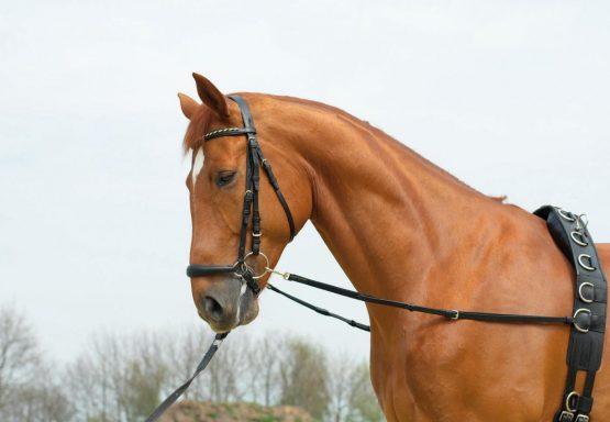 hjälptygel elastisk del F ponny 275 555x384 - Hjälptygel
